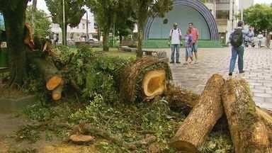 Após chuva, trabalhadores limpam estragos deixados em Alfenas (MG) - Após chuva, trabalhadores limpam estragos deixados em Alfenas (MG)