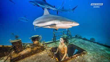 A Rotina Dos Tubarões