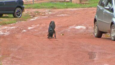 Animais soltos em ruas preocupam moradores do bairro Matinha em Santarém - Segundo os moradores, a quantidade é assustadora. Eles temem o risco da proliferação de doenças.