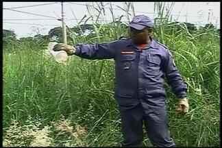 Bombeiros de Ituiutaba realizam ação no combate ao Aedes aegypti - Vistorias em terrenos baldios são realizadas pelos bombeiros. Objetivo é evitar criadouros do Aedes.