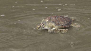 ONG da região solta cinco animais selvagens após reabilitação - Animais estavam desnutridos por consequência da poluição.