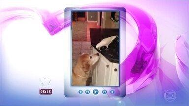 Cachorro e pássaro dão lição de solidariedade em vídeo - Ana Maria mostra vídeo que já teve mais de 17 milhões de acessos na internet