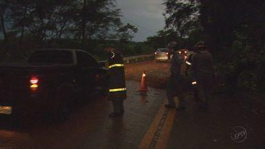 Rodovia é interditada após queda de árvore entre Cravinhos e Serrana - Trânsito ficou parado por meia hora na noite de quarta-feira (23) para o trabalho do Corpo de Bombeiros.