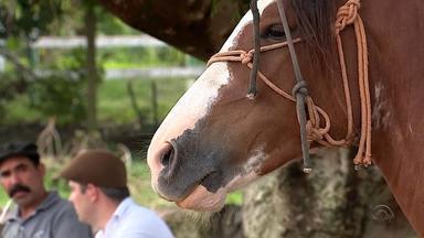 Zona Sul de Porto Alegre conserva espaços que se assemelham à fronteira do RS - Gaúchos vivem pilchados e andam a cavalo em meio à cidade grande.
