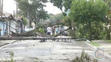Estragos da chuva complicavam a vida dos moradores em São José nesta terça - Prefeitura retirava galhos das ruas e moradores faziam faxina nas casas.