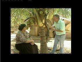 Inter TV Rural esclarece dúvidas de telespectadora sobre coqueiros - Telespectadora de Ipaba diz que coqueiros não estão desenvolvendo.