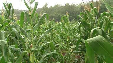 Agricultores do sudoeste temem quebra na produção se geada vier - Lavouras de milho, soja e feijão podem sofrer caso haja geada essa semana.