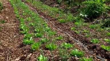 Saiba como funciona a Agrofloresta - Os agrônomos chama a técnica de consórcio de espécies. Frutas, verduras e legumes são plantados numa mesma horta sem agrotóxico.