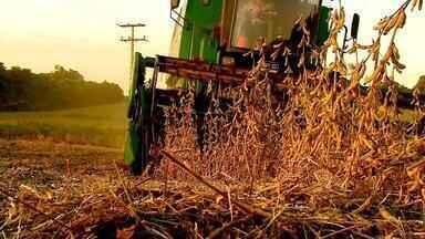 Caminhos da Soja: produção de grãos fortalece economia gaúcha - Assista ao terceiro episódio desta série especial.