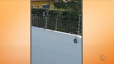 Suspeito é morto e outro é baleado após invasão a casa em Florianópolis - Suspeito é morto e outro é baleado após invasão a casa em Florianópolis