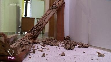 Infestação de cupins pode causar muita destruição em casa - Felipe Suhre foi à casa de Ricardo verificar o estrago causado pelos cupins