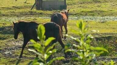 Veja o que foi notícia no agronegócio gaúcho durante a semana - Veja o que foi notícia no agronegócio gaúcho durante a semana.