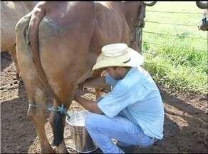 Agropecuária reúne produtores de leite que investem na genética bovina em Araguaína - Agropecuária reúne produtores de leite que investem na genética bovina em Araguaína