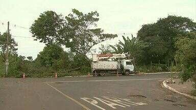 Queda de árvores é principal causa de interrupção de energia durante temporais em Ribeirão - Nesta quarta-feira (1º), várias arvores caíram e deixaram 13 mil clientes sem luz em casa.