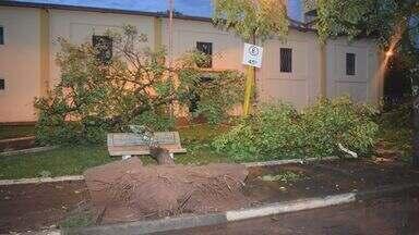 Vendaval derruba muros, grades, telhados e árvores em distrito de Casa Branca, SP - Não há registro de desabrigados ou feridos. Uma equipe emergencial da prefeitura ainda trabalha para recolher entulhos.