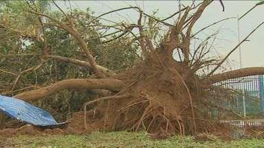 Chuva causa destruição em São Carlos, SP - Vendaval atingiu parte do Campus da USP, destelhou casas e uma escola.