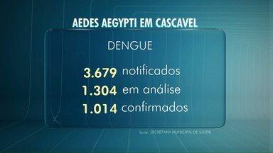 Casos de dengue crescem em Cascavel - Mesmo com 1.014 casos confirmados, ainda não entramos em epidemia.