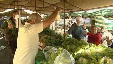 Frio intenso prejudica qualidade de verduras e legumes na região de Ribeirão - Algumas variedades dobraram de preço durante a semana.