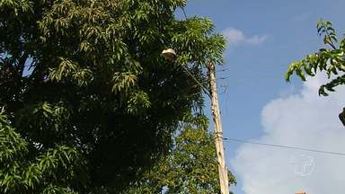 Moradores precisam estar atentos para problemas na rede elétrica - São muitas as situações de risco que os moradores podem enfrentar na rede em Santarém