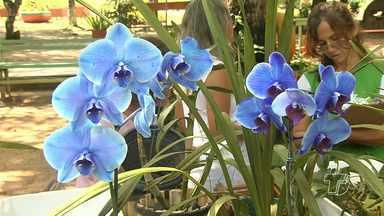 Santarenos se dedicam ao cultivo de orquídeas - Mesmo sendo raras na região, existem pessoas que apreciam e cultivam a planta.