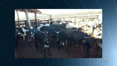 Polícia apreende 180 cabeças de gado sob suspeita de que elas foram furtadas, em GO - Animais estavam em uma fazenda próxima à cidade de Rio Verde. Um homem foi preso.