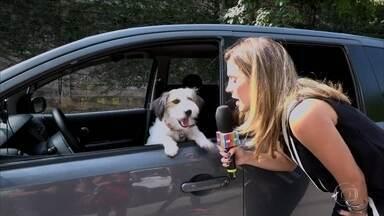 Confira o Diário de Gravação do cachorro Tito - Animalzinho está fazendo o maior sucesso na novela 'Haja Coração'
