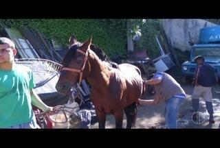 Cavalos que realizam passeios turísticos passam por avaliação em Petrópolis, no RJ - Tema é discutido em Comissão Especial na Câmara de Vereadores da cidade.