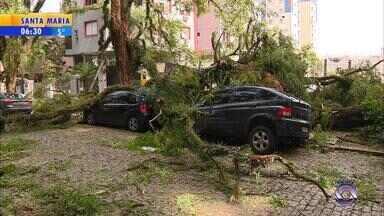Painel RBS Notícias discute possíveis medidas para prevenir desastres ambientais no RS - Porto Alegre começa reposição de árvores comprometidas cinco meses após temporal