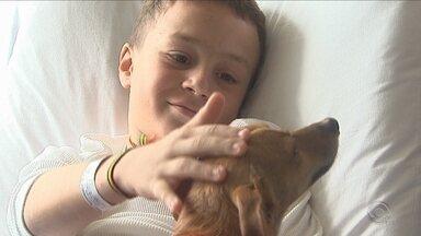 Projeto conta com a ajuda de cães para a recuperação de crianças em Lages - Projeto conta com a ajuda de cães para a recuperação de crianças em Lages
