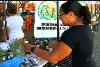 13' Feira do Milho acontece no Crato - Feira reúne também agricultores do amendoim, feijão