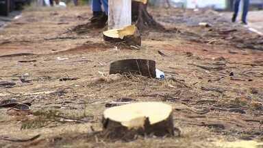 Moradores reclamam de retirada de árvores para construção de BRT, em Goiânia - Quem passa pelo local afirma que sentem falta da sombra. Amma diz que corte é autorizado e outras árvores serão plantadas na região.