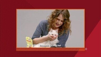 Empresa americana cria coleira que traduz os miados dos gatos - Basta colocar o dispositivo no pescoço do felino e esperar ele soltar a lingua.