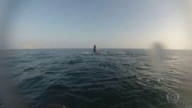 Baleias nadam perto das Ilhas Cagarras - Rapaz estava passeando com a família quando registrou as imagens