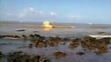 Baleia jubarte é encontrada morta em praia de Aracruz, ES - Animal está ameaçado de extinção, segundo ambientalista.Corpo da baleia está em um local de difícil acesso por causa de pedras.