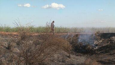 Queimada atinge plantação de cana em Batatais, SP - Clima seco piora situação e incêndios em vegetação aumentou 40% este ano.
