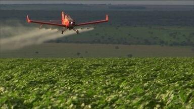 Inseticida lançado de aviões pode causar riscos, dizem especialistas - Uso foi autorizado onde há muitos casos de dengue, chikungunya e zika. Inseticida pode atingir pessoas, alimentos e reservatórios de água.