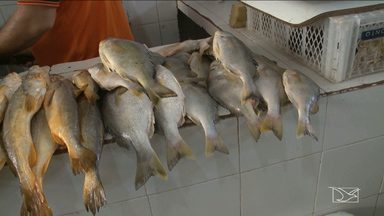 Preço dos pescados diminui e anima consumidores em São Luís - Preço diminuiu em decorrência da safra produtiva no estado.