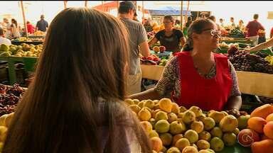 Em Petrolina, muitas crianças trabalham nas feiras livres - A prática ganha ainda mais força porque conta com o apoio de muitos adultos