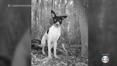 Grupo de cães abandonados se tornou uma matilha violenta no Rio de Janeiro - Rita Ericson comenta o problema do abandono de cães e fala sobre o desequilíbrio da fauna local causado por estas matilhas. A veterinária garante que é possível reverter o comportamento dos cachorros e torná-los dóceis novamente
