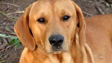 Família de SC denuncia morte de cão por tiro e afirma que PM fez disparo - Família de SC denuncia morte de cão por tiro e afirma que PM fez disparo