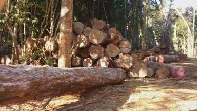 Quinhentas toras de madeira de lei são apreendidas em Lábrea, Sul do Amazonas - Segundo a polícia, a carga iria para Rondônia.