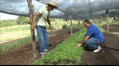 Curso técnico em agronegócio capacita produtores rurais na Paraíba - O Bom Dia Paraíba acompanhou uma aula de campo na cidade de Alagoinha. O curso é gratuito e ainda há vagas.
