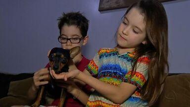 Convivência entre crianças e animais traz benefícios - Convivência entre crianças e animais traz benefícios, desde que sejam tomados cuidados com a saúde dos pets.