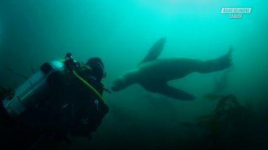 Aventura Com Leões-Marinhos Gigantes
