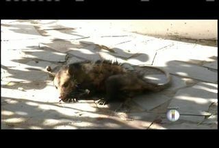 Saiba o que fazer quando se deparar com animais silvestres na rua - O Corpo de Bombeiros de Governador Valadares já registrou 50 capturas este ano.