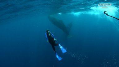 Emoção, Tensão E As Baleias Cachalotes