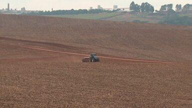 Assista ao 1º bloco do Caminhos do Campo do dia 24 de julho de 2016 - Reta final do plantio de trigo, com redução de área e mercado em alta