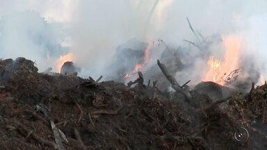 Incêndio destrói área de mata nativa na região rural de Palestina, SP - O fogo destruiu tudo em poucas horas. Ao todo, 200 hectares, na zona rural de Palestina (SP), viraram cinzas. Os radares do Inpe (Instituto Nacional de Pesquisas Espaciais), que monitoram os focos de queimadas na região, registraram a área destruída.