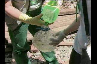 Alerta em Santo Ângelo, RS, com caso de zika - Três casos foram confirmados na cidade.