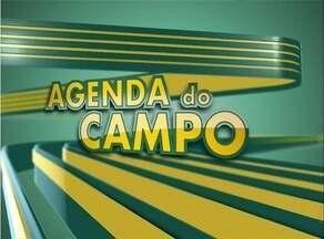 Confira as programações para o produtor rural do Tocantins na Agenda do Campo - Confira as programações para o produtor rural do Tocantins na Agenda do Campo